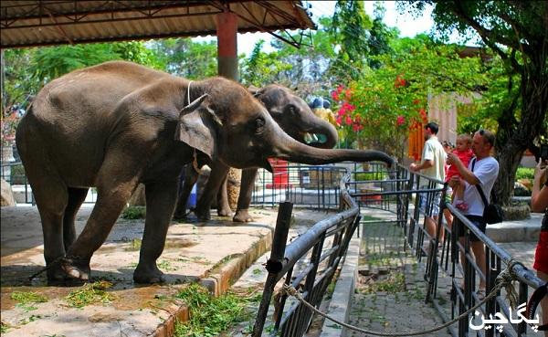 باغ وحش پوکت دنیایی ناشناخته از حیوانات