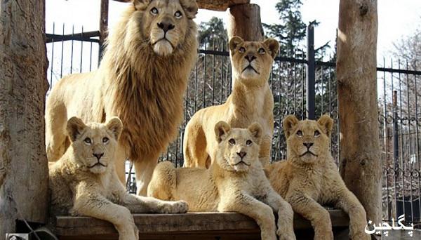 باغ وحش تفلیس