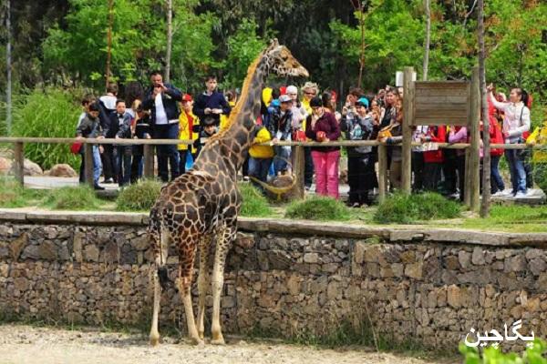 باغ وحش ازمیر یکی از بهترین مناطق تفریحی برای خانواده ها