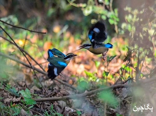 باغ پرندگان سلیم علی در گوا